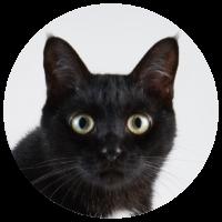 cat-BB